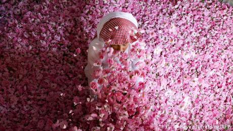 BdTD Saudi-Arabien Taif | Damaszena-Rosenblätter für Rosenöl-Herstellung