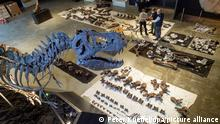Кости тираннозавра в Музее динозавров