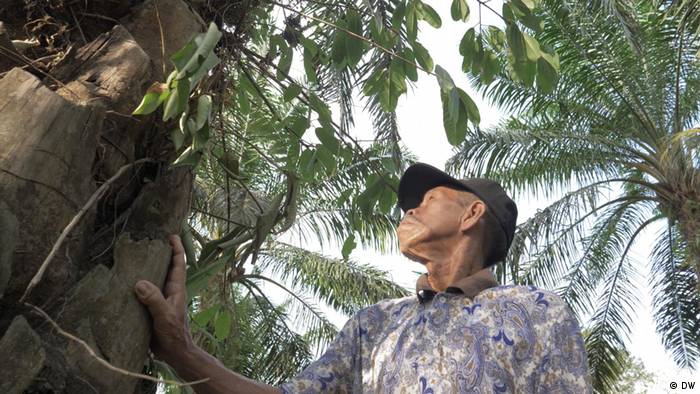 A man in a cap looks at a palm tree. His hand is placed on the trunk