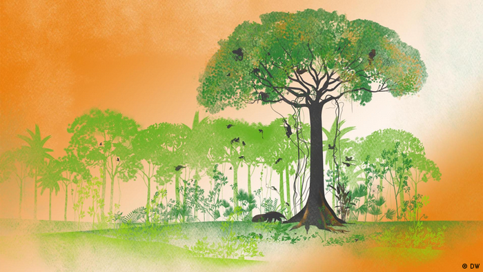 An illustration of the Kapok tree