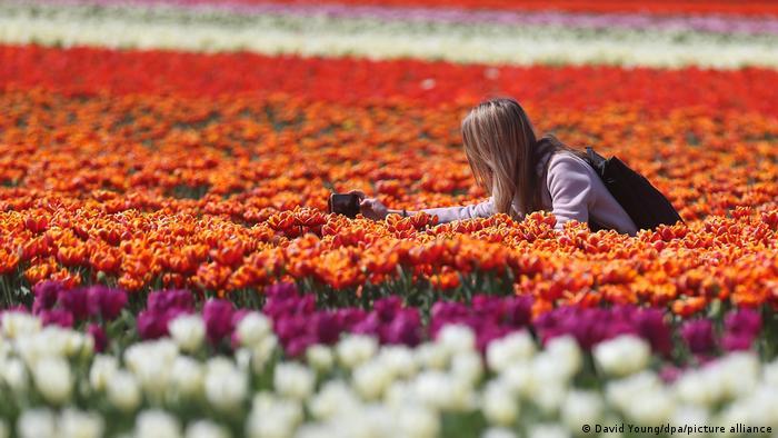 Este invierno ha sido especialmente largo en Alemania y todavía en abril se siente su presencia en la mayor parte del país. En este campo de tulipanes, sin embargo, ubicado en Grevenbroich, en el estado federado de Renania del Norte-Westphalia, la primavera llegó como de costumbre con su espectáculo de colores y aromas. El lugar es muy popular para tomar la foto perfecta.