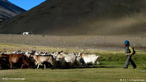 Nomad – India, Ladakh (CC / mckaysavage)