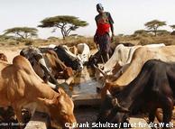 Secas que ocorriam a cada cinco anos agora são anuais, e pastores não conseguem se recuperar