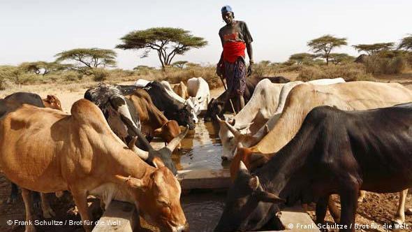 Brot für die Welt: Kenia
