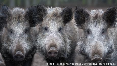 Ukraine Tschernobyl Wildfleisch