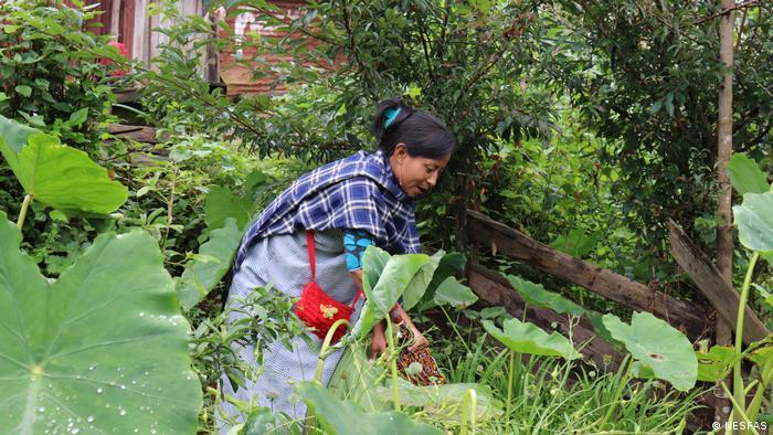Marwein en su huerto en Meghalaya, India.