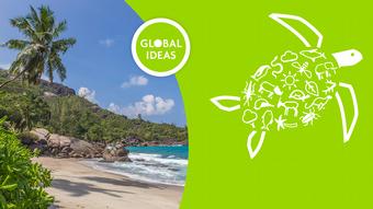 DW Global Ideas Lernpaket 8 Onlinebild Wildtiere