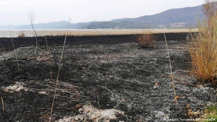 Nordmazedonien Struga - Brennendes Schilf am Ufer des Ohridsees