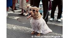 +++ACHTUNG: Verwendung nur zur Berichterstattung zum Bildband Magnum. Hund erlaubt! Verwendung nur bis zum 12.09.2021+++ NEW YORK, USA, 1983.