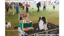 +++ACHTUNG: Verwendung nur zur Berichterstattung zum Bildband Magnum. Hund erlaubt! Verwendung nur bis zum 12.09.2021+++ WINDSOR CHAMPIONSHIP DOG SHOW, GB, 2007.
