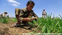 Jemen Landwirtschaft Jemenitische Bauern