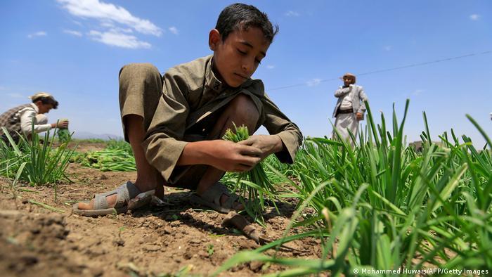 طفل مزارع في اليمن