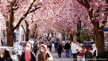 A street with cherry blossoms and masked people in Bonn