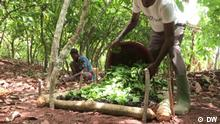 Eco Africa-Sendung vom 30.04.2021. On this week's Eco Africa, we see how old-fashioned herding can help prevent fires, look into saving an important wetland at the gates of Tunis and try out technology to improve agriculture in Ivory Coast.