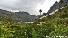 Spain Gran Canaria | Coffee growing in Valle de Agaete