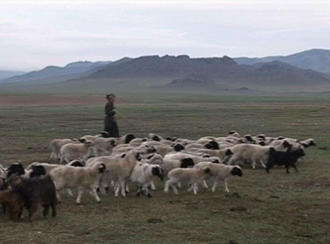 A Mongolian shepard is travelling through the steppes