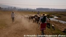 Hirten gehen auf einer staubigen Weide hinter Schafen entlang eines fast ausgetrockneten Flusses