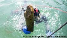 Archäologischer Fund einer Pfahlbausiedlung aus der späten Bronzezeit im Luzerner Seebecken