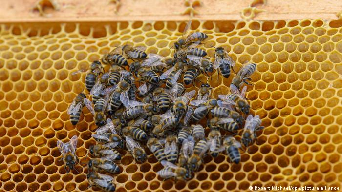 Bees sitting on a hive