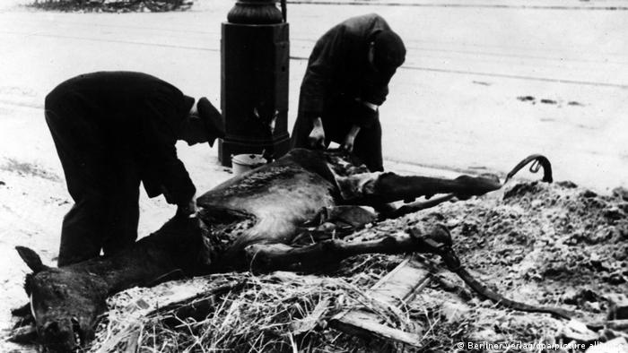 دو مرد در یکی از خیابانهای برلین در حال جدا کردن تکههای گوشت از لاشه یک اسب هستند که در حین بمباران شهر کشته شده.