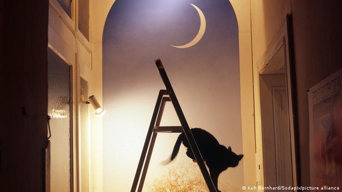 Un gato negro baja por una escalera cerca de una ventana, con la luna en primer plano.