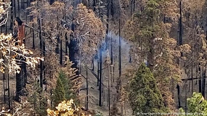 La secuoya gigante que ha estado ardiendo y humeando en el Parque Nacional de Sequoia, California, Estados Unidos.