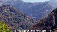 Kalifornien Riesenmammutbaum brennt seit 2020