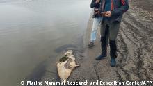 Kaspisches Meer | Über 100 Robben Tod angespült