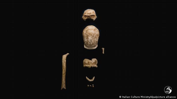 Ossos fossilizados de Neandertal