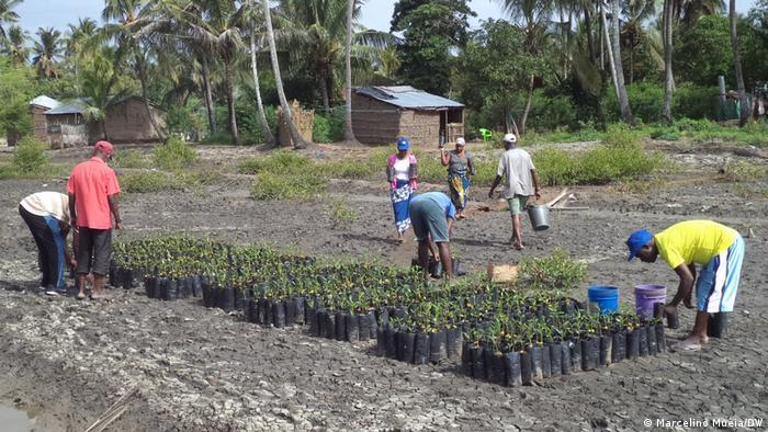 Mosambik |Wiederaufforstung in Quelimane