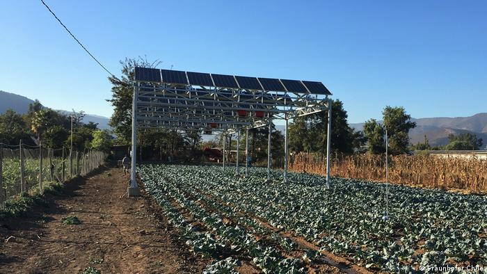 Agri-PV solar panels in Chile with vegetables growing beneath