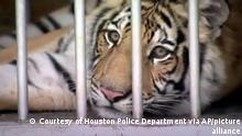 USA Tiger in Houston gefunden