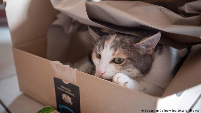 Symbolbild | Katze in Paketbox