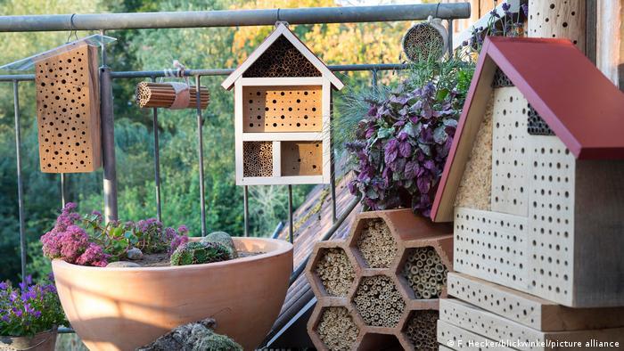 Такі вулики або просто старі колоди створюють чудові місця для розмноження диких бджіл