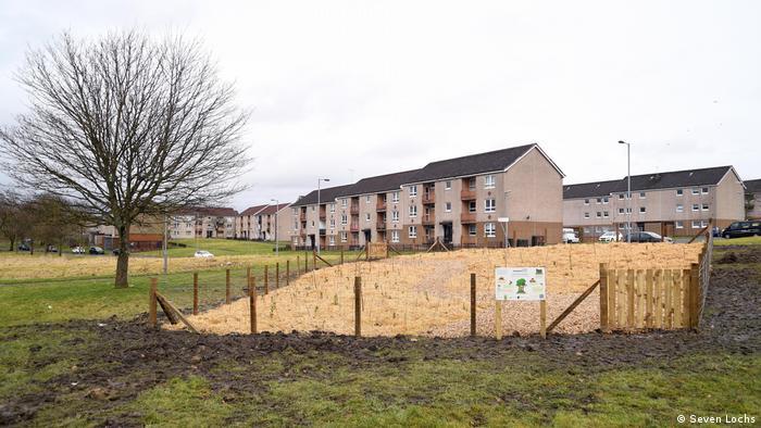 Ein neu gepflanzter Mini-Wald am Rande einer Siedlung in Glasgow, Schottland