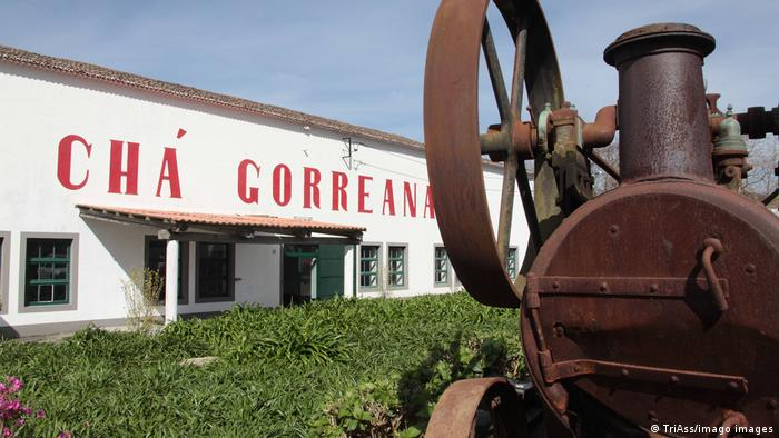 Portugal Azores Sao Miguel Maia | Tea processing plant Cha Gorreana