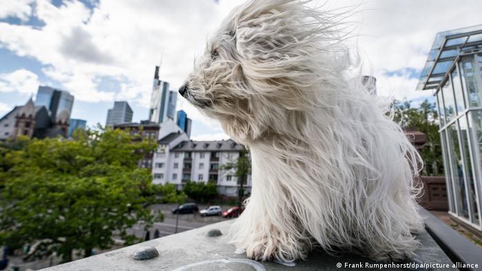 Deutschland Hund auf dem Eisernen Steg in Frankfurt
