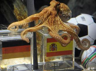 octopus and two glas containers