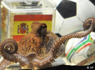 octopus Paul, container with Spanish flag and a football in the background