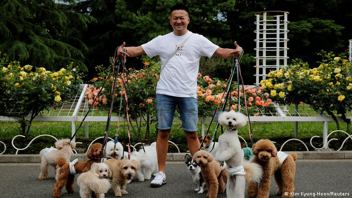 Man in Tokyo takes his many pet dogs for a walk