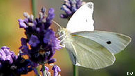 BdT Deutschland Wetter Sommer Schmetterling und Laveldel