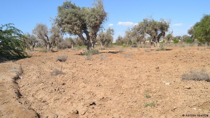 Angola'nın güneyinde de kuraklık yaşanıyor