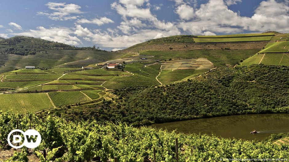 Alto Douro: The world's oldest wine-growing region
