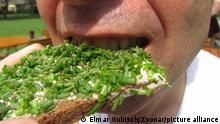 guy bites into bread with spread and chives, vegan snack || Modellfreigabe vorhanden