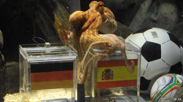 Paul the octopus oracle predicting a World Cup game.