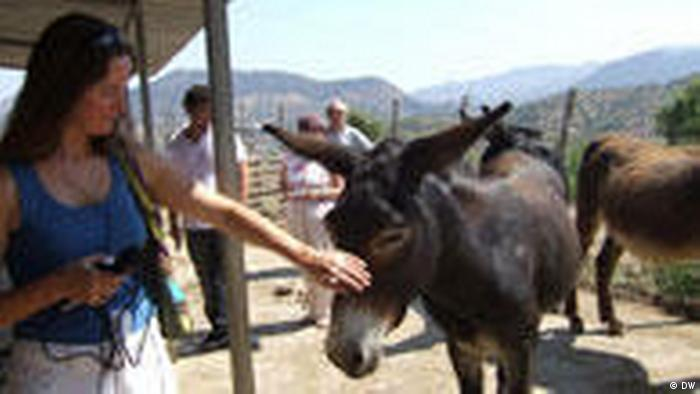 Sizilien Esel Müll Donkey Rubbish (DW)