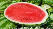 Wassermelone, Watermelon