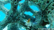 SHIFT vom 05.06.2021 Reef Design Lab