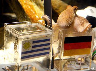 Осьминог Пауль ест из кормушки с флагом ФРГ