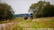Radfahrer auf dem Elberadweg bei Abbendorf in Brandenburg (Prignitz), aufgenommen am 18.08.2011. Foto: Peer Grimm dpa
